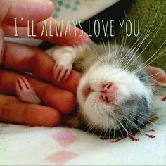 Rattie love is the best love!