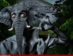 amazing+photos   The Amazing Elephant Man Pics - High Resolution Photoshop Pictures ...