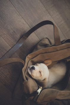 Pup in a bag