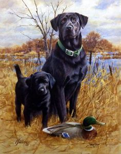 "Another great hunting dog print--LIKE FATHER, LIKE SON by James Killen. A black lab puppy stands proudly with his dad over a mallard duck decoy. Hand Signed by Artist Image Size 14""W x 18""H"