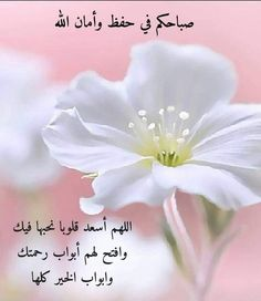 Morning Wish, Flower Backgrounds, Good Morning Images, Morning Quotes, Relationship, Flowers, Plants, Facial Massage, Gull