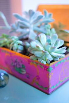 Turn a vintage tin into a beautiful home for your favorite variation of succulents.