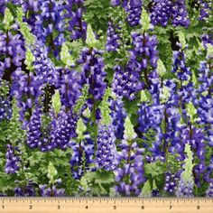 Lupine Fabric  by Timeless Treasures-Nature C2765  Purple