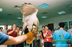 Abu Dhabi Falcon Tour
