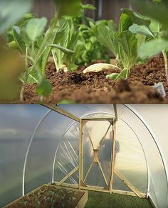High Tunnel Winter Gardening -f you want more vegetables to grow, then you'll definitely run out of space inside your home. Before the thought of an expensive greenhouse upset you, check these high tunnel gardening ideas. High tunnels are also called the poor man's greenhouse so it won't make a huge cut in your budget. And the return will be all worth it. You can grow bulky brassica vegetables in the greenhouse such as cabbages, broccoli, and brussels sprouts