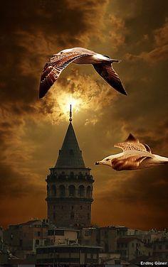 #istanbul #türkiye #galatakulesi #martı