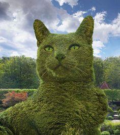 By Richard Saunders - Surrealist Artist A beautiful Cat topiary Cat Garden, Garden Art, Amazing Gardens, Beautiful Gardens, Animals And Pets, Funny Animals, Topiary Garden, Topiaries, Garden Animals