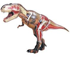 4D Vision Tyrannosaurus Rex Anatomy Model by Tedco, http://www.amazon.com/dp/B001YITDG4/ref=cm_sw_r_pi_dp_yOvarb0AGXM8Q