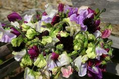 The debutantes of the sweet pea world, grown at www.commonfarmflowers.com