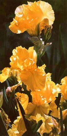 Brenda Semanick.      Oil