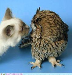 kisses!  (Looks like my cat!)