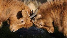 ¿Compites o te comparas? http://psicopedia.org/6600/compites-te-comparas/