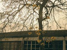 Yellow love by marusweet, via Flickr Explore, Love, Yellow, Photography, Amor, Photograph, Fotografie, Photoshoot, Fotografia