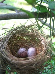 A Touch of Spring !!! / Nest & Eggs
