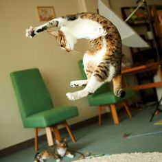 Flying cat from Philipee Bosc