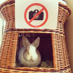 Hey mum! Can't you read the sign?!  Follow Tiffo on Instagram @tiffoco