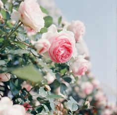 Very three-dimensional – pink, green, and blue make for a beautiful photograph of flowers