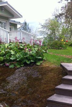 Kevättä odotellessa pohdintoja suuren piha puutarhanhoidosta