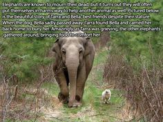 I just love elephants so much!  These happy facts will slap a smile on your face (16 Photos)