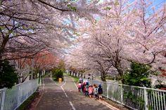 北海道道1148号札幌恵庭自転車道線 (Shiroishi cycling road)