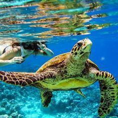 Tropical Island Living | Via♕ LadyLuxury♕