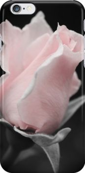 Pink Rose phone cases by Crossmark.  http://www.redbubble.com/people/crossmark/works/14687619-pink-rose?p=iphone-case&ref=work_carousel_work_portfolio_1