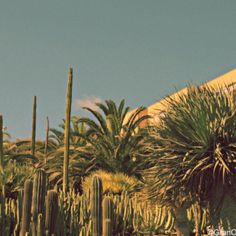 Parque Juan Pablo II, Las Palmas de Gran Canaria