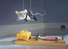 Fotos engraçadas de animais fazendo coisas engraçadas - IntraDayFun