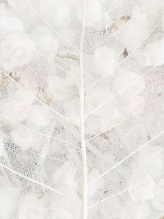 """Texture/ pattern /// """"White is not a mere absence of colour, it is a shining and affirmative thing"""" Art Texture, Pattern Texture, White Texture, Natural Texture, Pure White, White Light, Black And White, White Leaf, Photocollage"""