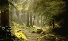 Puck's Glen, the famous short walk on the Cowal Penninsula