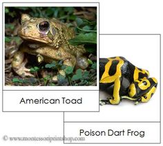 Frog and Toad Picture Cards: Montessori Home Learning Materials