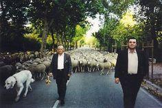 Cesáreo Rey, uno de los últimos pastores trashumantes de España