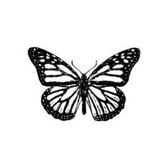 Details about Monarch Butterfly unmounted rubber stamp, bug, summer, Sweet Grass Stamps Mini Tattoos, Dainty Tattoos, Tattoos Skull, Black Tattoos, Body Art Tattoos, Tribal Tattoos, Small Tattoos, Cool Tattoos, Ribbon Tattoos