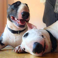 Beautiful Bully Friends
