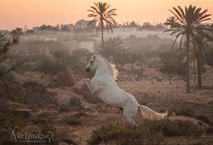beautiful horse, beautiful place <3