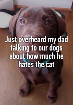 """Just overheard my dad talking to our dogs about how much he hates the cat"""