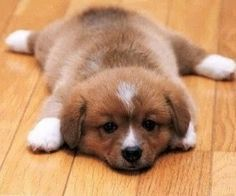 17 Of The Cutest Puppies In The World