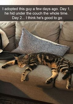 25+ Hilarious Cat Snapchats That Will Leave You With The Biggest Smile (New Pics) #CatFunny
