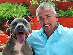 "Why I Love... Pit Bulls | Cesar Millan: ""Go beyond the stereotype and you'll discover a smart, calm, and loving companion, just as I did 20 years ago."""