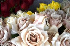 Sahara Roses by Georgianne Vinicombe at Monday Morning Flower and , via Flickr