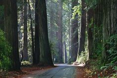 Humbolt Redwoods State Park, California