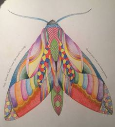 Completed One Of The Moths From Millie Marotta Animal Kingdom Colouring Book