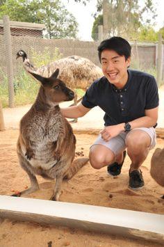 Friendly kangaroos enjoy a pat at Melbourne Zoo