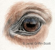 Draw a Horse Eye in Colored Pencil - learn how to draw horses' eyes in colored pencil following this tutorial by guest artist Janet Griffin-Scott: Highlights and Lashes