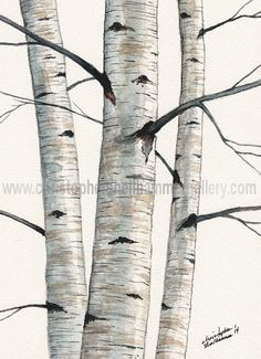 Original Classic Birch Trees Watercolor Painting, 5 x 7 inches, by Christopher Shellhammer. on Etsy, $72.00