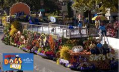 Ever seen me surf this Rose Parade float? Catch me surf again today on Who Let the Dogs Out on Hallmark Channel