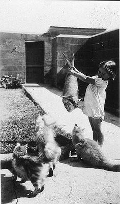Feeding the cats. 1936