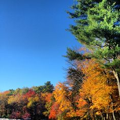 This is called #work #Babson #fall    #babson on Instagrid.me   The Best Way to View Instagram Photos