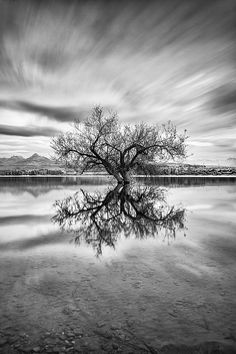 tree in the water, reflection sunset, Spain.