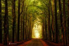 Alley of trees in Velhorst Estate, Gelderland Lochem, Netherlands ✯ ωнιмѕу ѕαη∂у